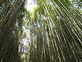 Smangus 司馬庫斯 - panoramio (5).jpg