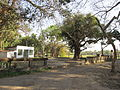 Smashan Kalitala - Baduria - North 24 Parganas 2012-02-24 2443.JPG