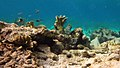 Snorkeling Karpata Reef, Bonaire (12841929245).jpg