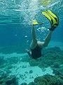 Snorkelling in Bora Bora.jpg