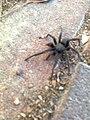 Spider Av0769.jpg