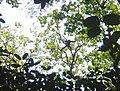 Spider monkey DSC05758.JPG