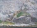 Spot Of Grass And Ailsa Craig Gannetry - geograph.org.uk - 1375728.jpg