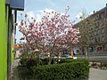 Spring in Nuremberg.jpg