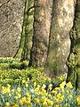 Spring in St. James Park - London (2329864564).jpg