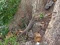 Sri Lanka Photo042.jpg