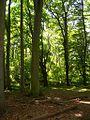 Stärkerwald Rotbuchen.jpg