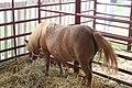 Stirling Fair 2010 3010 (4895534010).jpg