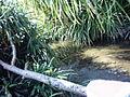 Stream In Saint Martin Island.JPG