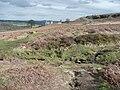 Stream on Baildon Moor - geograph.org.uk - 748467.jpg