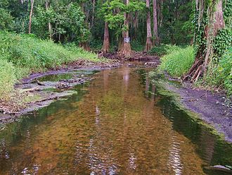 Peace River (Florida) - Image: Streamflow changes along upper Peace River, Fl 3