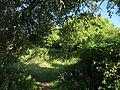 Strete Gate Picnic Site - geograph.org.uk - 1360541.jpg