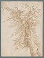 Study of a Tree MET DP221574.jpg