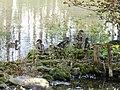 Sulphur Springs Conservation Area (44668773601).jpg