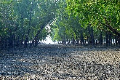Sundarban forest.jpg
