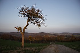 Sunset view from Luxembourg into Germany - panoramio.jpg