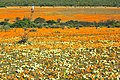 Suráfrica, Namaqualand 02.jpg