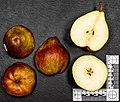 Sweet Doret (pear) jm124418.jpg