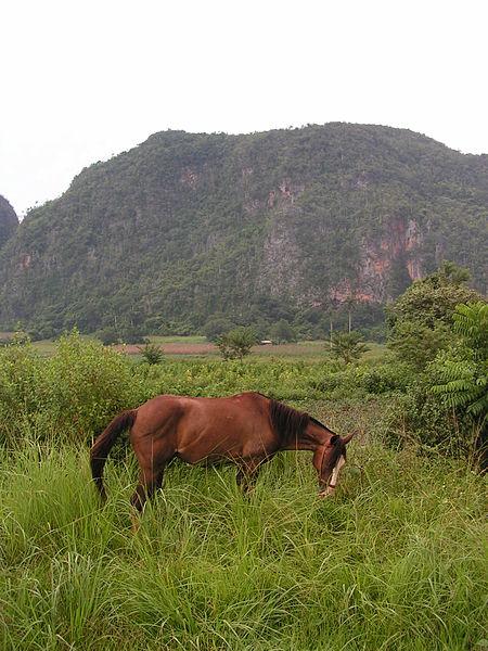 450px-Szene_im_Valle_des_Vinales,_Kuba.j