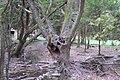 Szenvedés - panoramio.jpg