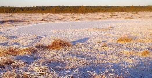 Talv Kõnnu Suursoos5.jpg