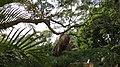 Taronga Zoo, Sydney - panoramio (6).jpg