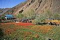 Tehran Province, Chalus Rd, Iran - panoramio.jpg