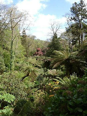 Microclimate - Tree ferns thrive in a protected dell area in the Lost Gardens of Heligan, in Cornwall, England, latitude 50° 15'N.