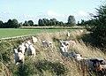 The Minster Way, Arram - geograph.org.uk - 919670.jpg