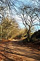 The Old Road from Triscombe up to Triscombe Stone - geograph.org.uk - 22443.jpg