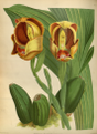 The Orchid Album-01-0059-0019.png