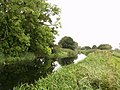 The Pocklington Canal (disused) - geograph.org.uk - 573675.jpg