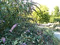 The TNU Botanical Garden in Simferopol, Crimea, Ukraine 21.JPG