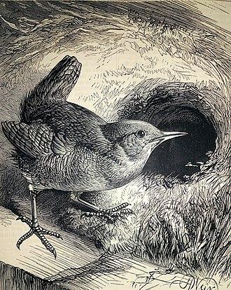 Harrison Weir - The Wren's Nest (1881)