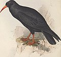 The birds of Europe (1837) (14565549887).jpg