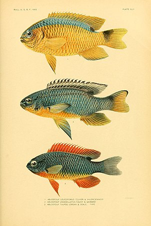 The fishes of Samoa (Plate XLIII) (5998997552).jpg