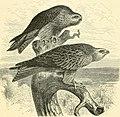 The royal natural history (1893) (14598175999).jpg