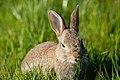 The smart rabbit 2017.jpg