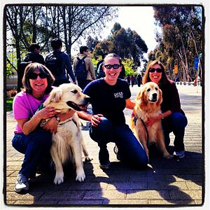 Therapy dog - Therapy Fluffies at UC San Diego