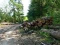 Timber stacks - geograph.org.uk - 803827.jpg