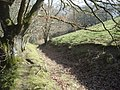 Track on the edge of Knill Wood - geograph.org.uk - 901572.jpg