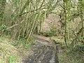 Track through the woods - geograph.org.uk - 689969.jpg