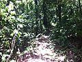 Trail - panoramio (12).jpg