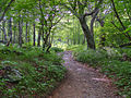 Trail near Craggy Gardens - panoramio.jpg