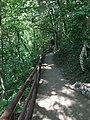 Trail to Jackson Falls Tennessee.jpg