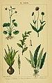 Traité pratique et raisonné des plantes médicinales indigènes (Pl. XXXVII) (6459828573).jpg