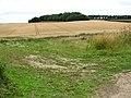 Tramlines in barley field - geograph.org.uk - 1410209.jpg
