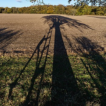 File:Tree Shadow - Hitch Wood