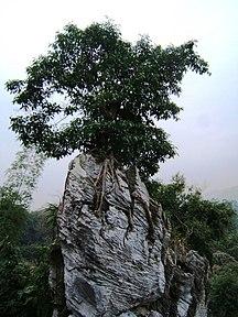 Ха Жианг (провинция)