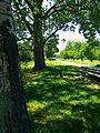 Trees - panoramio (36).jpg